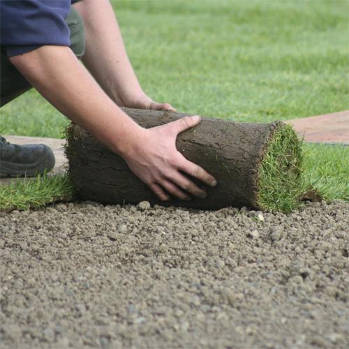 Посевная и рулонная укладка газона - цена за м2